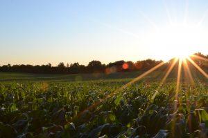 California Certified Organic Farmers (CCOF) proudly presents Organic Grower Summit 2018
